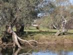 Albury Wodonga Surrounds