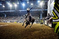 Wodonga a Key Step Towards Global Glory for Australia's Best Bucking Bull Riders