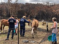 RSPCA NSW Outlines Bushfire Relief and Recovery Plan