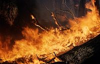New South Wales to Benefit from Bushfire Mitigation Funding